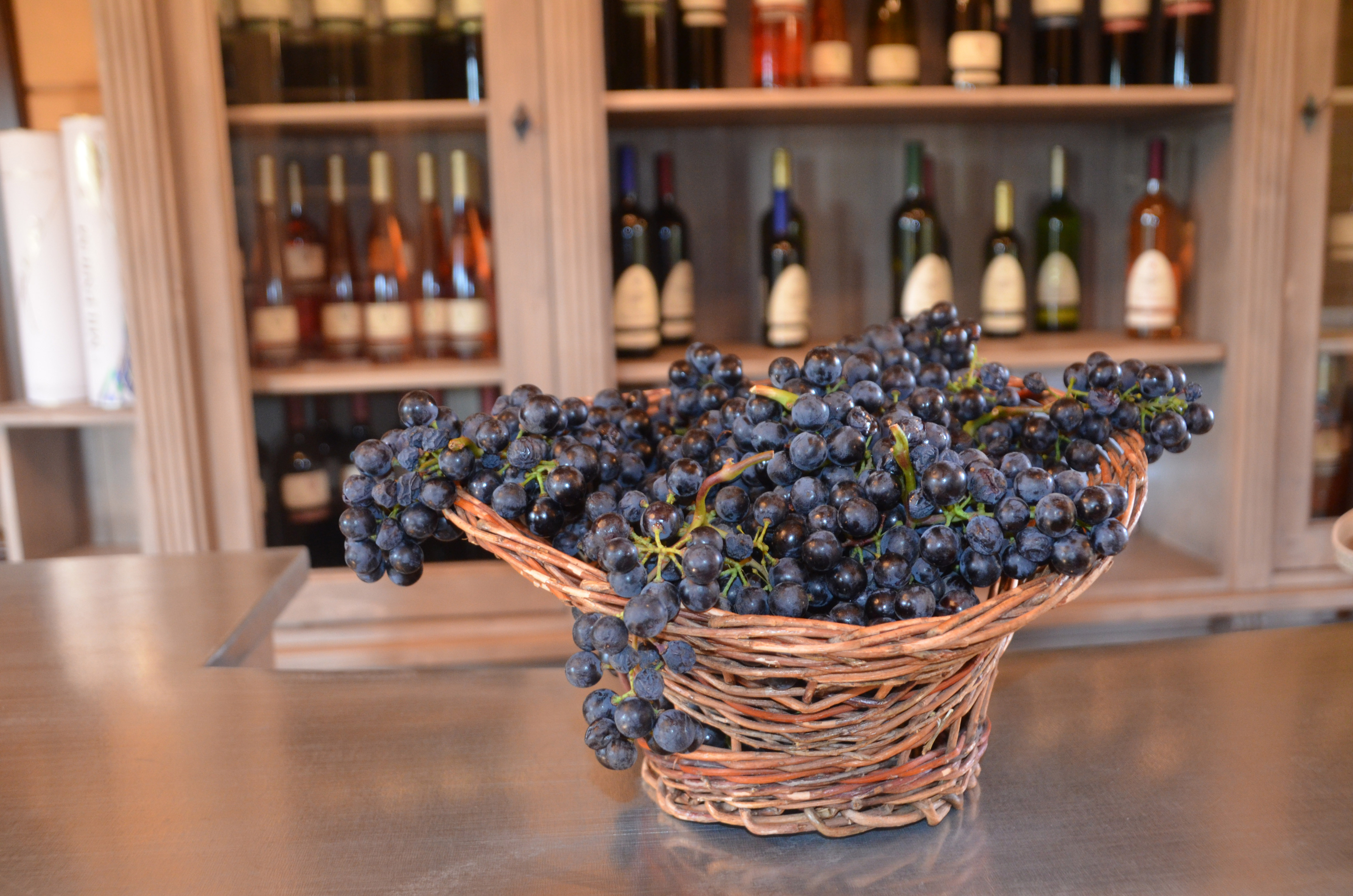 O zi la crama S.E.R.V.E. – povesti cu vin si un conte (P)
