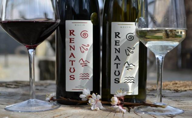 Am descoperit Vinurile de Măcin (P)